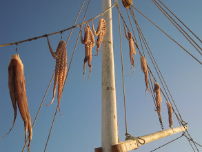 Photo: Octopus, fresh from the sea!