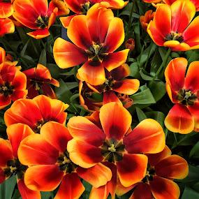 🌼🌸🌷🌹 by Baks Berbl - Flowers Single Flower