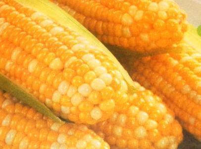 Clean and grill corn. Turning often ,till done. In the meantime, mix together mayonnaise, olive oil,and lime...