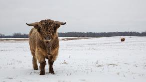 Walking in a Winter Pol-ar Land thumbnail