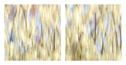 Photo: Inspired by Le Sacre du Printemps by Igor Stravinsky. Camera movement, no PS filters.