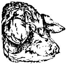 Photo: Świnia