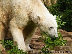 Photo: Knut ist mit Gruenzeug unterwegs ;-)