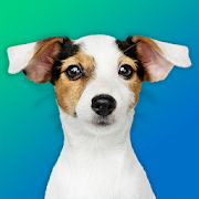Dog Quiz: Guess the Breed — Game, Pictures, Test