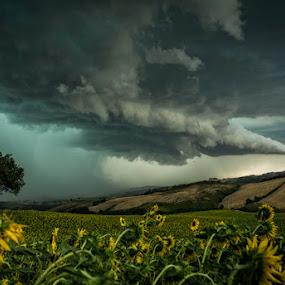 Rain is coming.... by Frans Scherpenisse - Landscapes Cloud Formations ( clouds, oak, sunflower, landscape, rain )
