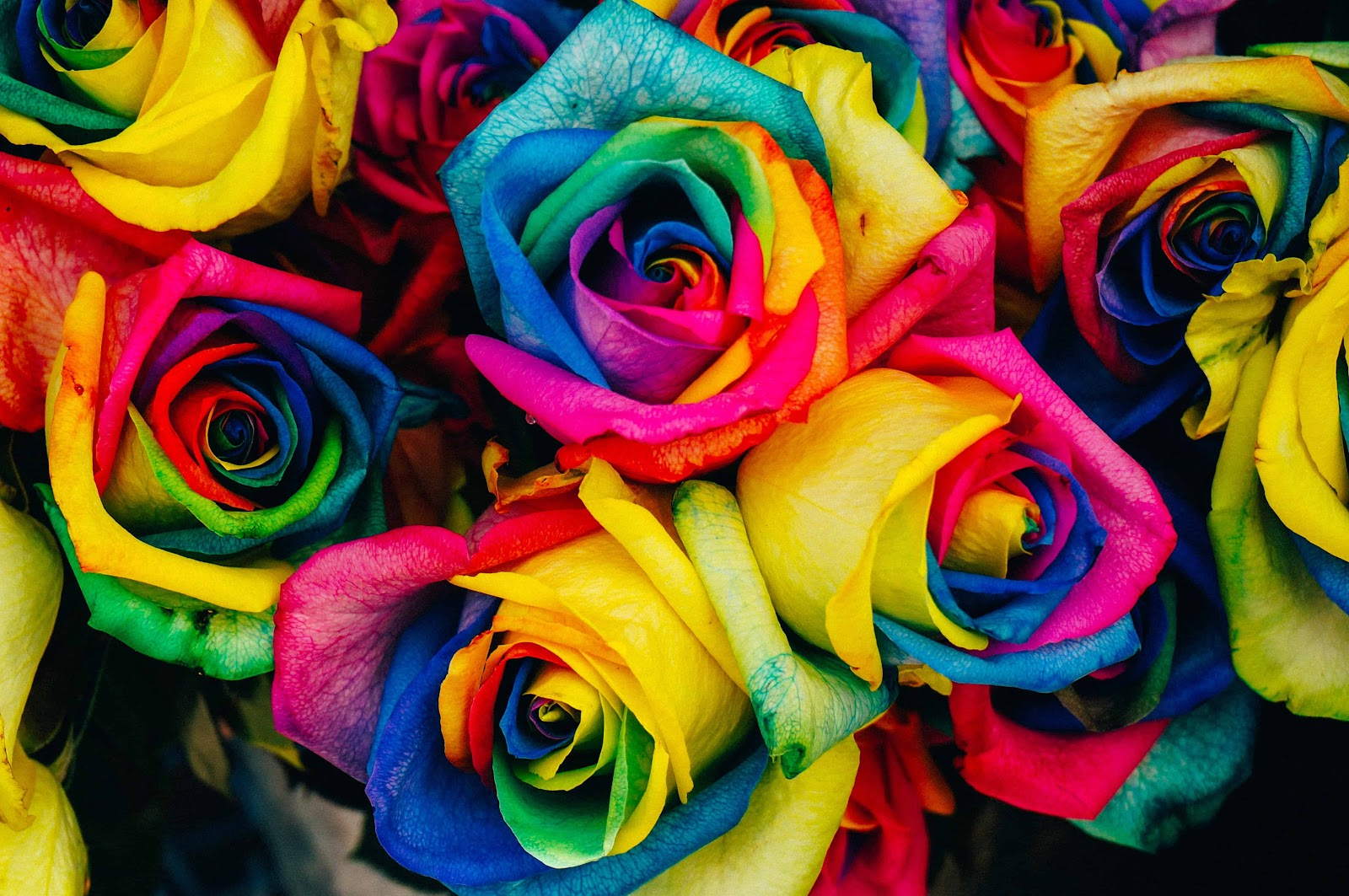 What Is A Rainbow Rose What Does It Mean Fresh Flowers