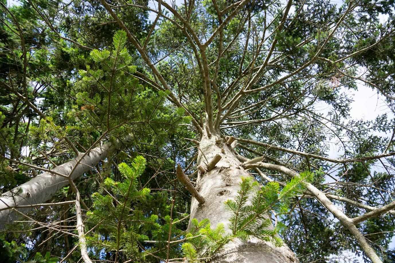 天空にのびゆく樹木