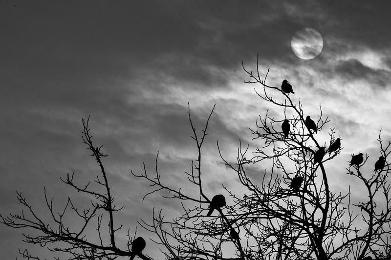 Il sole dietro le nuvole di federicopatti