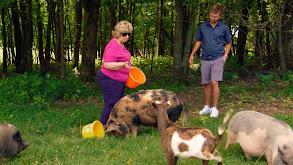 Faye's Pig Adventure thumbnail