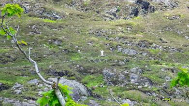 Photo: Zoomattu näkymä kristus-vapahtajan patsaasta Kylemoren luostarivuoren rinteellä.