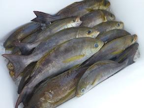 Photo: 釣果です。 アオキさんのクーラーBOX