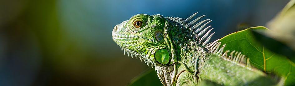 Reptiler