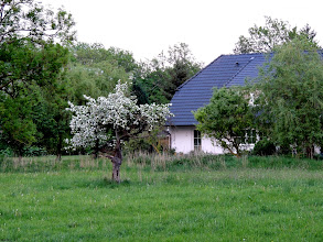 Photo: residential idyll  #TreeTuesday ( +Tree Tuesday ) Curated by +Christina Lawrie , +Shannon S. Myers , +Allan Cabrera , +Ralph Mendoza and +Kim Troutman #hqspnaturalother // +HQSP Natural Other #mecklenburg-vorpommern