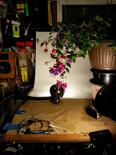 Photo: I set up this quick 'studio' in the laBOREtory so I could take some photos of the flowers.