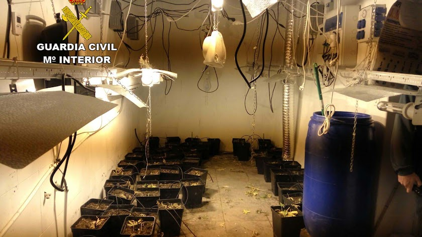Detenidos tras forzar el acceso a una casa para robar un cultivo de marihuana