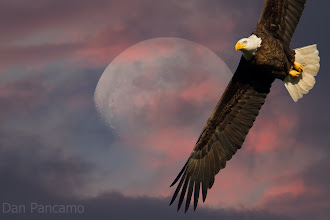Photo: Eagle Moon