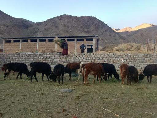 Support to Taru Gayphel Tsogspa Animal Welfare Society, Leh, Ladakh