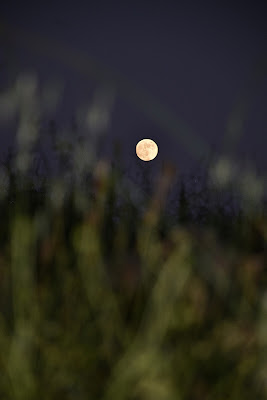 Moonlight di federicamanocchio