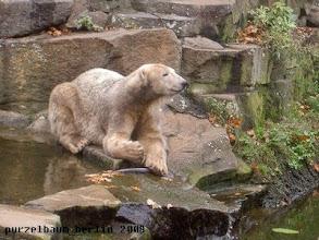 Photo: Knut hat es sich am Pool bequem gemacht ;-)