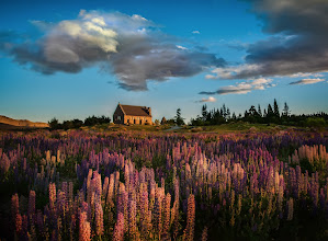 Photo: The Lupins in Tepako, New Zealand - from Trey Ratcliff at http://www.StuckInCustoms.com - all images Creative Commons Noncommercial