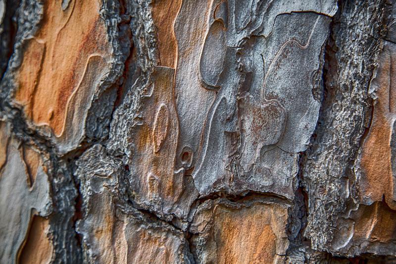Bark di MauMarty