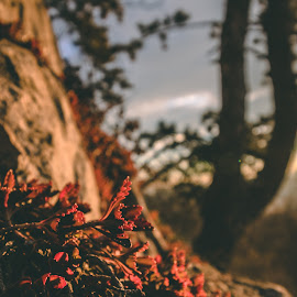 R&F by Paul Voie - Nature Up Close Leaves & Grasses ( close up, red f, bokeh, winter, sunny )