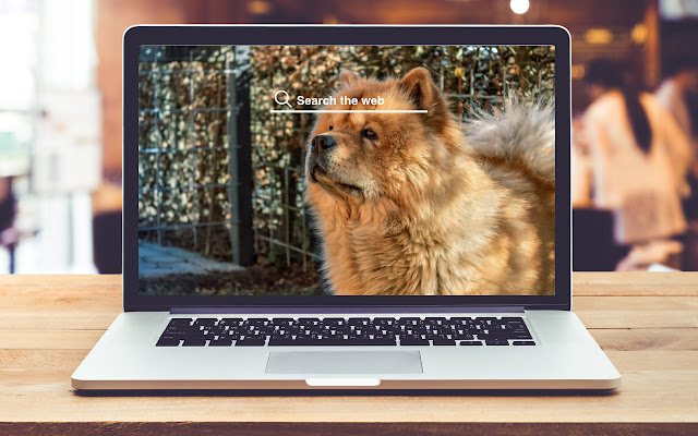 Chow Chow HD Wallpapers Dog Theme
