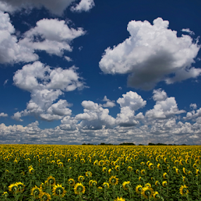 A Field Of Happiness by Kent Moody - Uncategorized All Uncategorized ( sky, blue, green, sunflowers, yellow, flowers, digital,  )