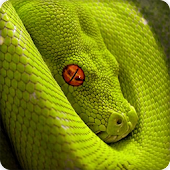 Anaconda Snake Wallpapers HD