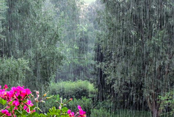 Piove! di Marina_Dossi