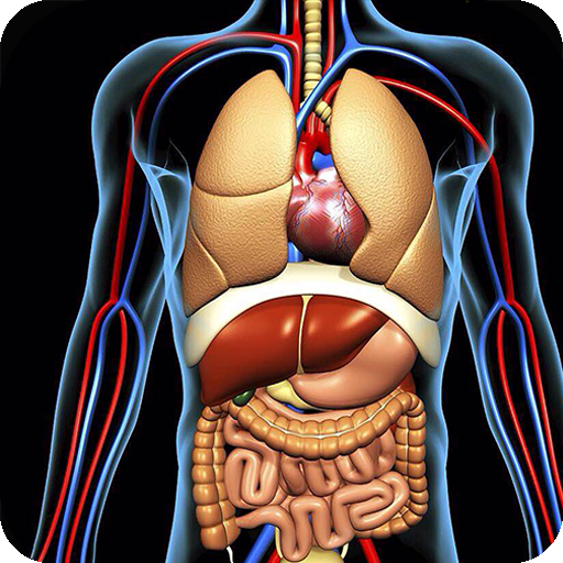 App Insights Human Anatomy Quiz Pro Trivia Learn The Human Body