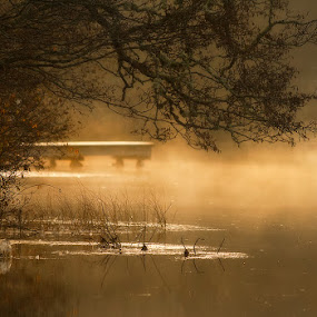 by Marie Gillander - Landscapes Waterscapes