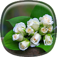 White Rose .. file APK for Gaming PC/PS3/PS4 Smart TV