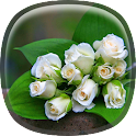 White Rose Live Wallpaper HD icon