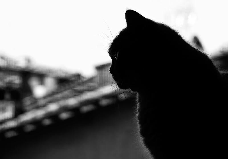 """""""La finestra sul... gattile"""" di DellaBrù"""
