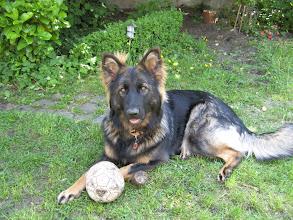 Photo: Aiki houdt de bal bij zich