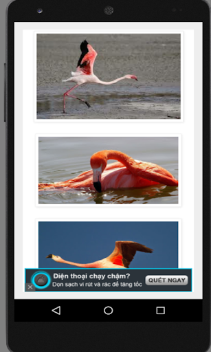 Beautiful Flamingo WP