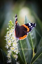 Photo: Vlinder Foto: Anja Wessels