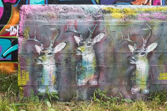 Photo: Dave Lowe - Deer Pastel - Austin, Texas