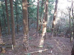植林帯になる