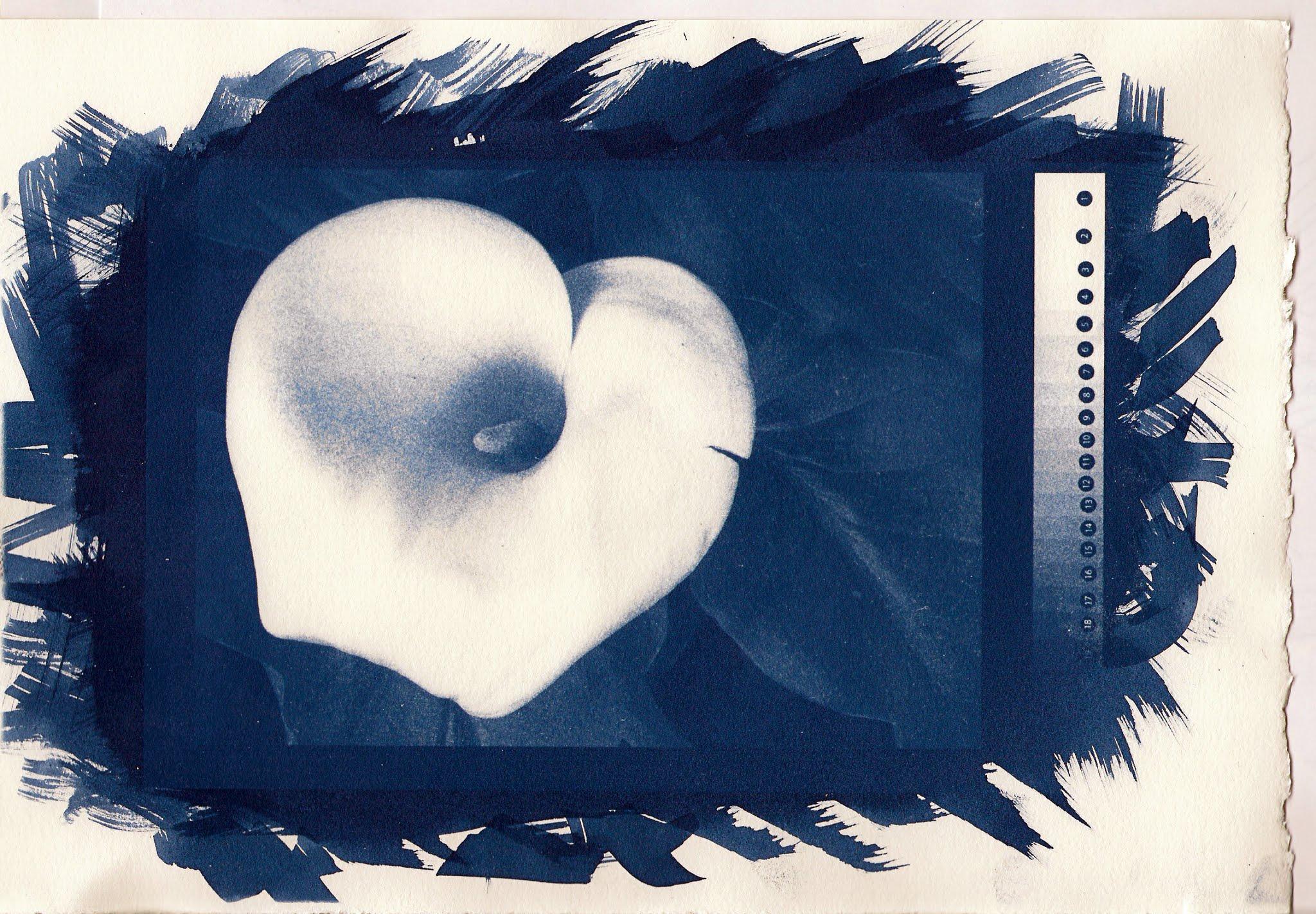 Photo: cyanotype