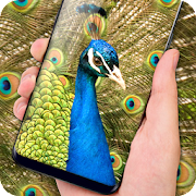 Peacock Live Wallpaper :  HD Colorful Backgrounds