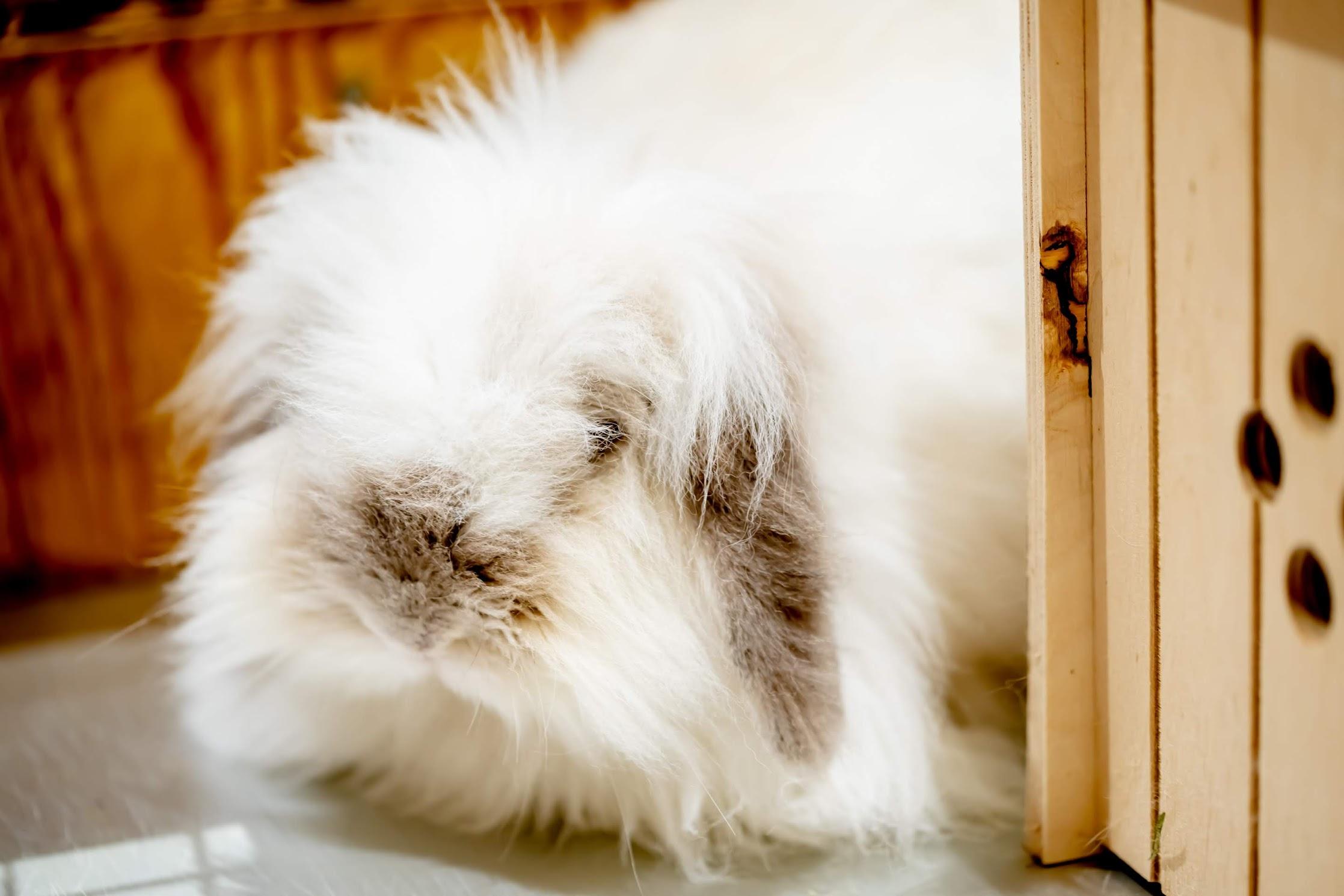 Tenpozan Anipa rabbits3