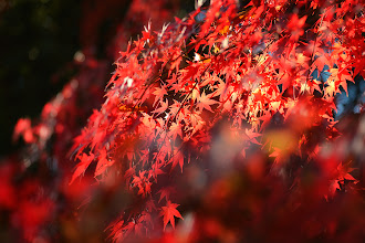 Photo: Autumn  I know there are already tons of fall color photos coming through your streams, hope you don't mind another. (^^;  This weekend went by way too fast, can't believe it's already over...  Hope you all had a good weekend! :)  #Japan  #Tokyo  #Fallcolors  #autumncolors