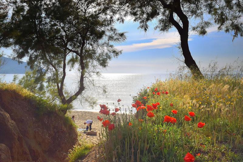 Papaveri sole mare e spiaggia  di Luciano Fontebasso