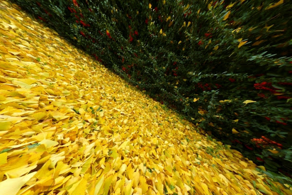 Caleidoscopio di autunno . . . di Hanami