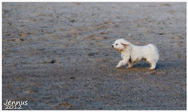 Photo: kleiner Hund im Wind