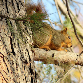 I am going to hide up here :) by Carol O'Connor - Animals Other