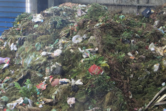 Photo: Green waste from Penrith council. Note green composting plastic bags are provided by council
