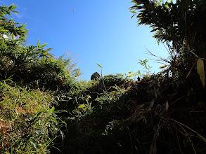 笹と草地を進む